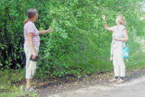 Putkelan kylästä muistoina ovat villiintyneet omenapuut metsätien varrella.