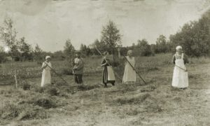 Heinäntekoa Järvisaaren kolhoosin pellolla.