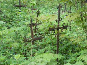 Saniaisten seasta pilkottaa vanhoja hautaristejä. Villiintynyt kasvusto kertoo omaa tarinaansa inkeriläisyydestä.