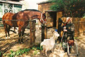 Tipunassa oli myös pietarilasten datsoja, hevosia, mutta myös vuohia mummojen kaitsemana.